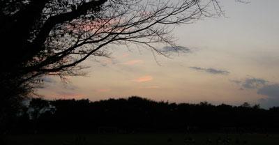 081104_dawn.jpg