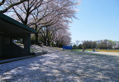 090410_sakurafubuki.jpg