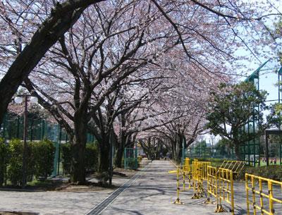 090402_sakura.jpg
